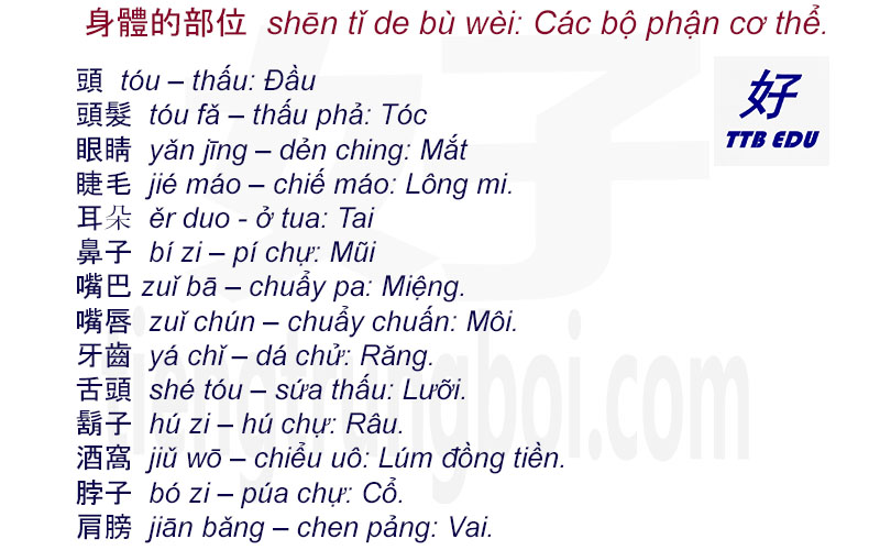 hoctiengtrung-bo-phan-co-the-1